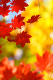 Fototapety beautiful bright autumn season