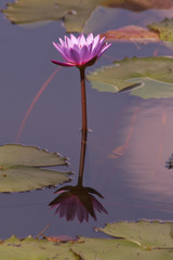 different view of water flower