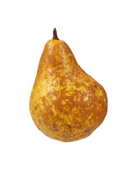 Single Colorful Bosc Pear