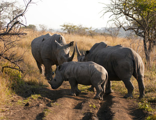 Rhinoceros Family Gathering