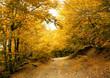Autumn park road.