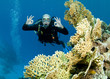 scuba diver drifts over reef