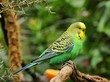 Budgerigar perched on a branch