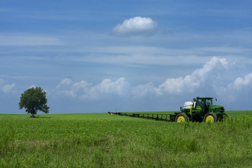 One tree in green soy field with tractor in foreground