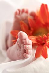 Babyfuesse mit Blume