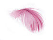 Pink Feather in soft focus view.