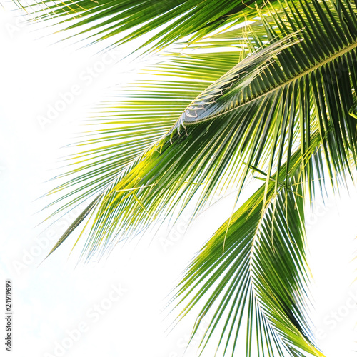 Deurstickers Palm boom Palm Tree Leaf