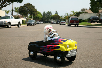 dog in a pedal car