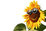 Sunflower with sunglasses, isolated - Fine Art prints