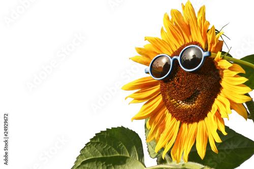 Plexiglas Zonnebloemen Sunflower with sunglasses, isolated