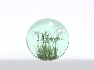 sfera piante grano ecologia