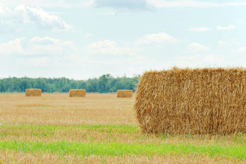 fresh cut straw in a field