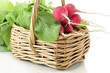 fresh radish in the basket