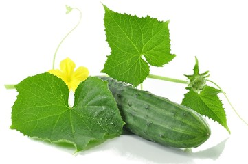 fresh cucumber with leaves