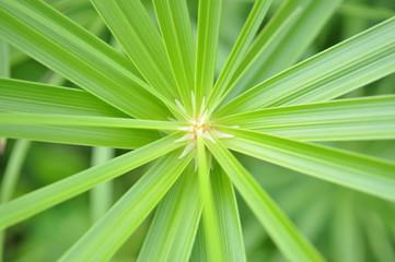 Leaf@葉