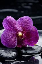 Fixer orchidée sur la pierre avec des gouttes d'eau