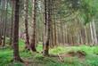 conifere alberi 1129