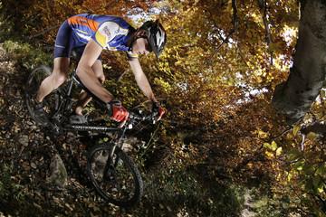 downhill herbst blätterwald