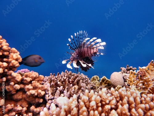Red Sea - 24982420