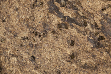 Holes after dung beetles in dung