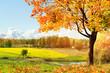 Leinwanddruck Bild - Autumn at the morning park
