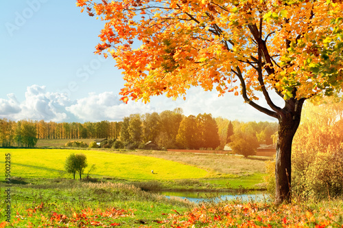 Leinwanddruck Bild Autumn at the morning park