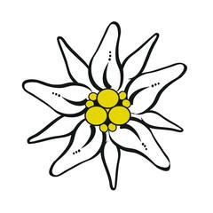 Gebirgsblume Edelweiß Freigestellt