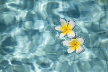 Frangipani flower in blue water