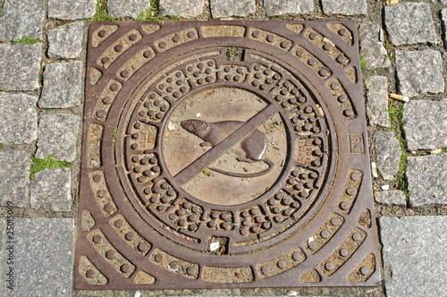 Kanal Bornholm Ratte - 25015069