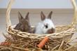 2 junge Kaninchen