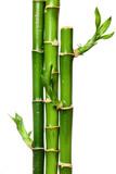 Fototapeta roślina - kiełkowy - Roślinne