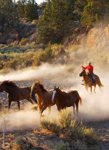 Cowboy on horse, roping and riding