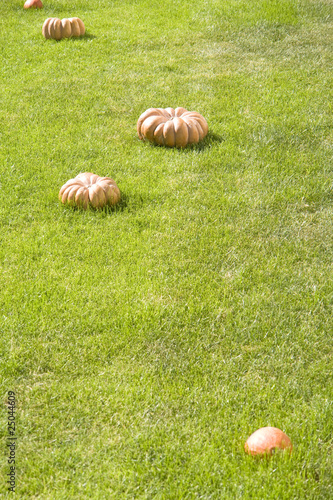 pumpkin on the lawn