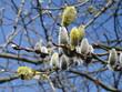 Frühling - Spring