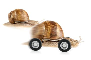 Überholende Schnecke auf Rädern