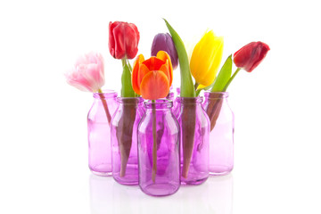 colorful Dutch tulips in little pink vases over white background