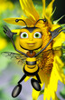 honey bee and the big yellow sun flower