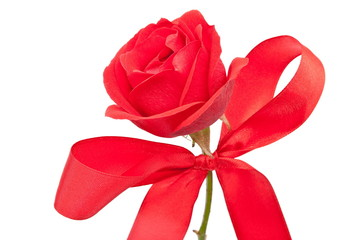 Red rose with bow