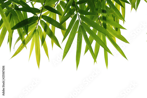 Papiers peints Bamboo bamboo leaves