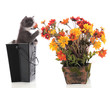 Kitty Sniffing Posies