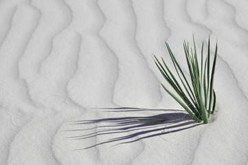 Végétation du désert