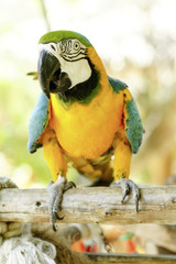 tropical parrot close up
