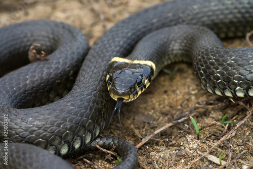 Черная водяная змея - символ 2013 года.