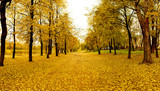 Mellow autumn in park in Vitebsk poster