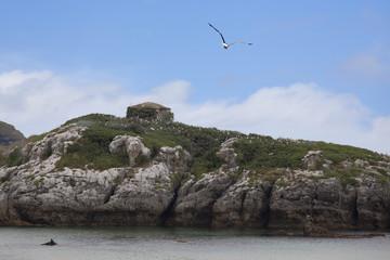 isla de gaviotas