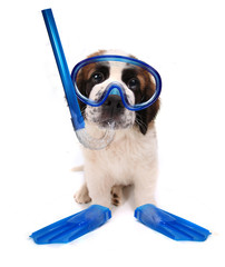 Puppy Wearing Snorkeling Gear on White Background
