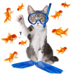 Funny Image of a Cat Fishing. Conceptually Analogous with the Te