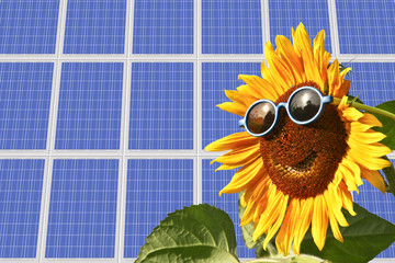 Sunflower with background solar