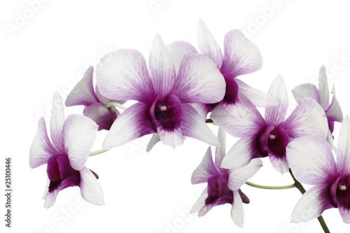 Fototapeten,orchidee,orchidee,blueten,violett