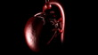 close-up of a 3d human heart beating